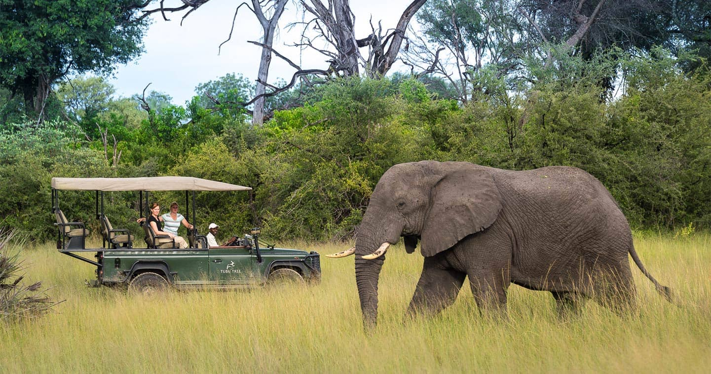 Moremi Game Reserve Game drive