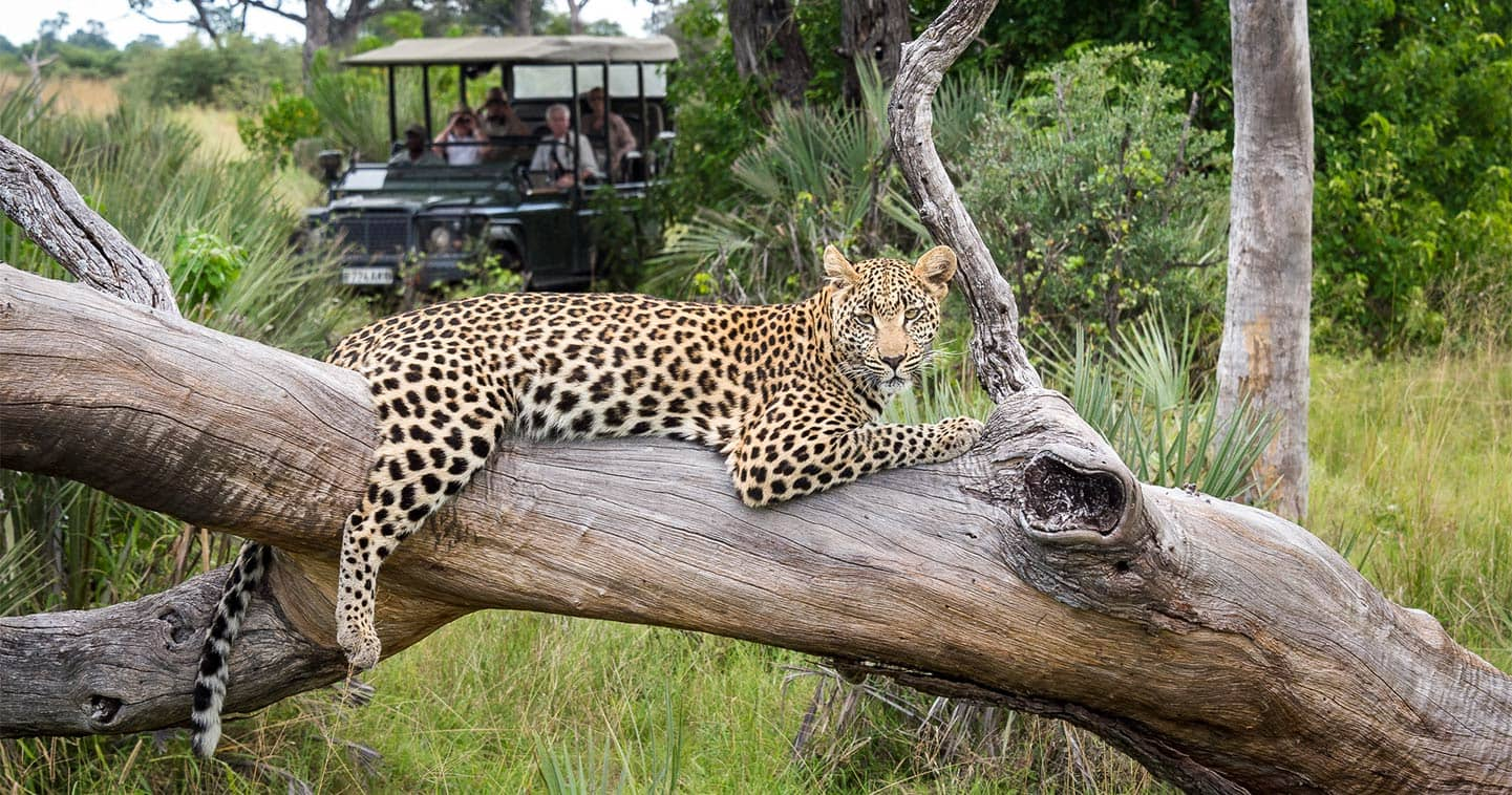 Game Drive in the Moremi Game Reserve