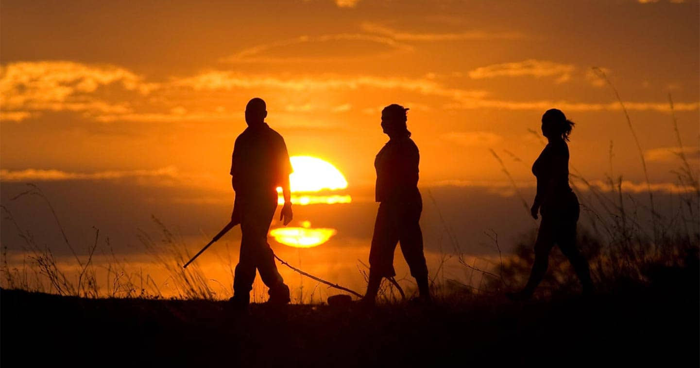 What is the Best Time to Visit Moremi, Botswana